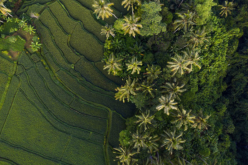 Ricefields in Bali are so beautiful